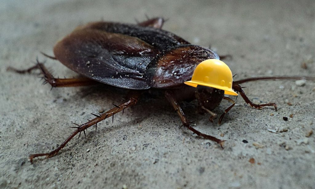 dream killing cockroach