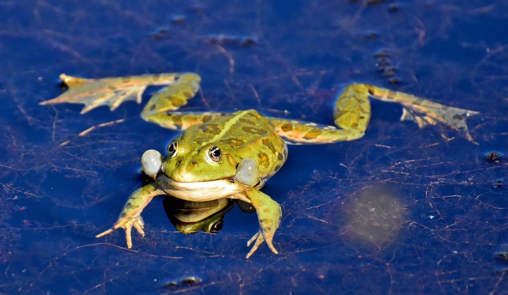 green frog dream meaning