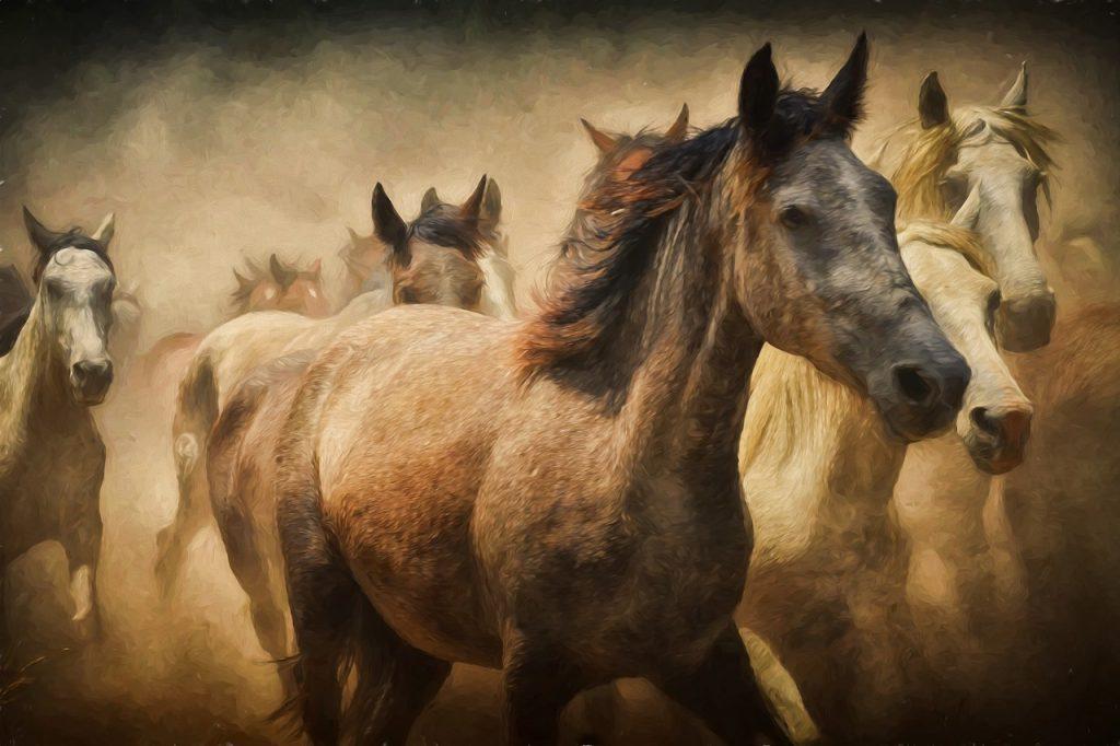 dream riding horse