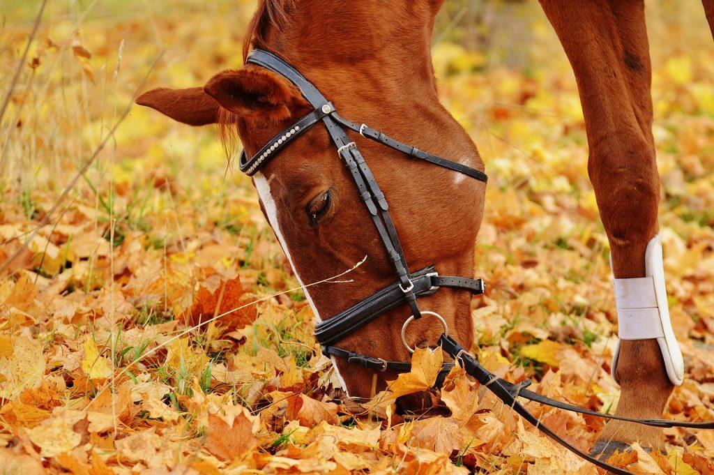 dream horse running