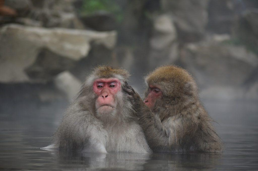 dream monkey bite