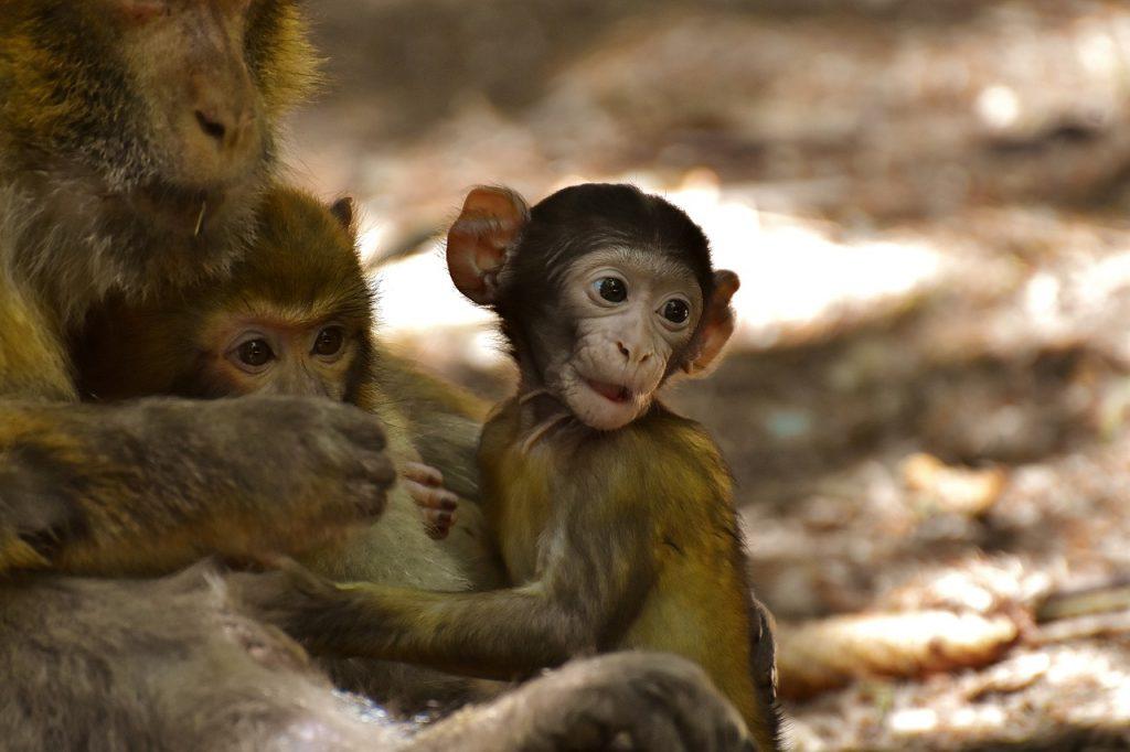 dream monkey on trees