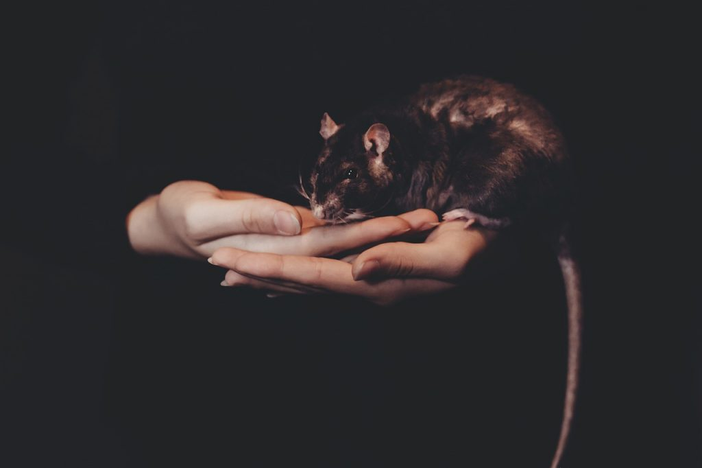 dream mouse in house