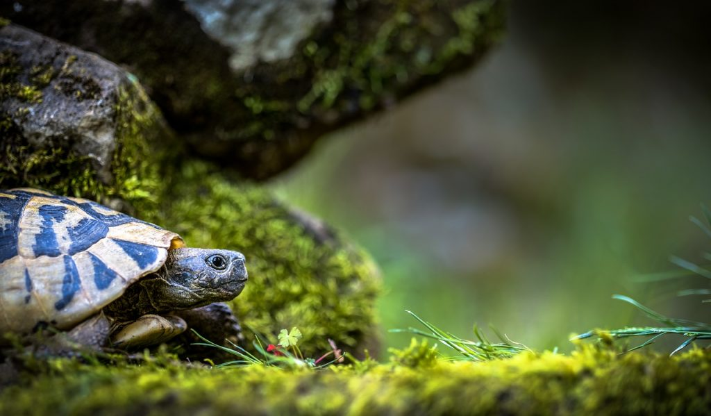 Turtle in dream interpretation