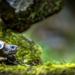 turtle dream meaning
