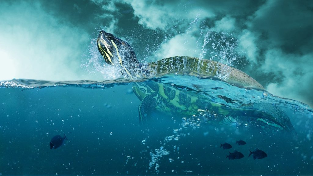 dead turtle dream meaning