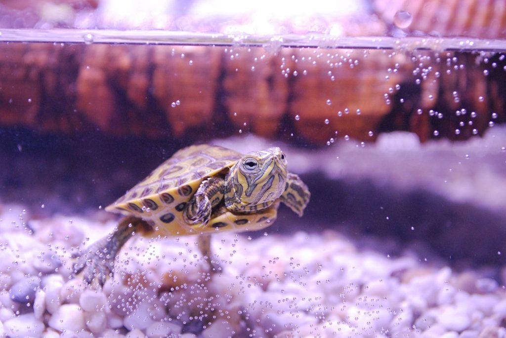 baby tortoise in dream