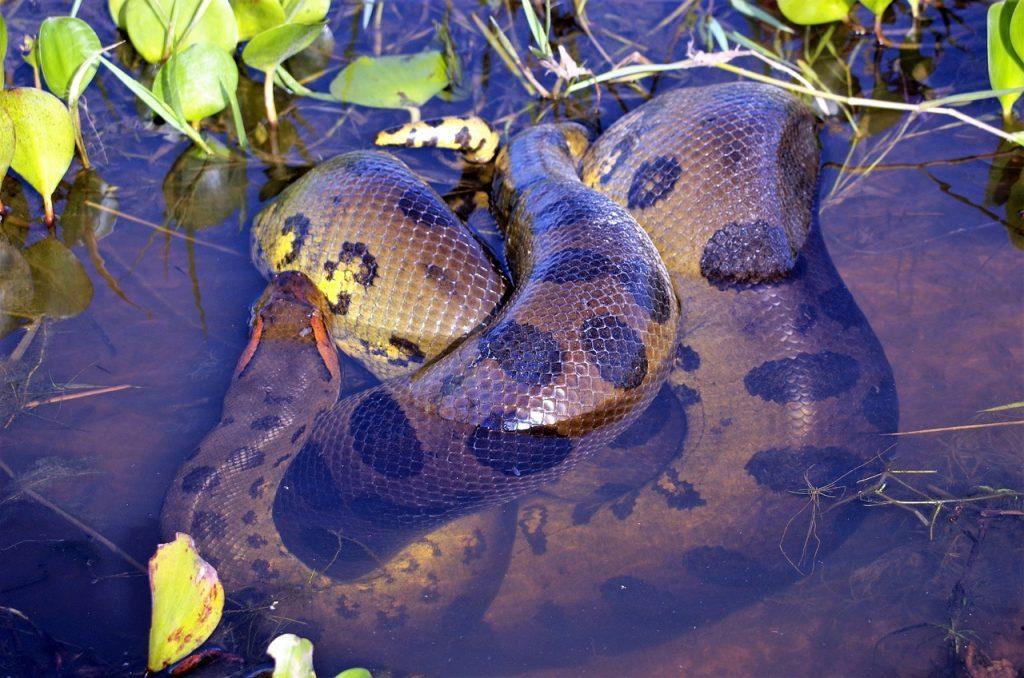 anaconda dream meaning