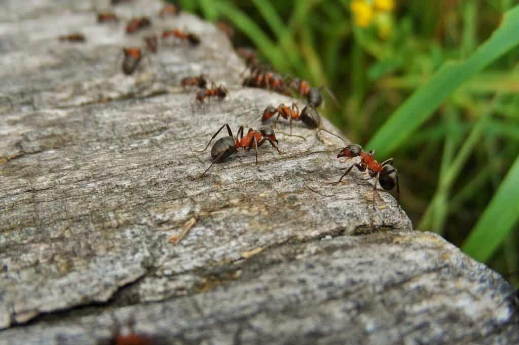 dream ants crawling