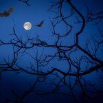 killing a bat in a dream