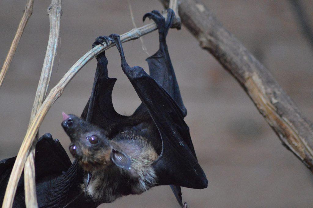 dream killing bats