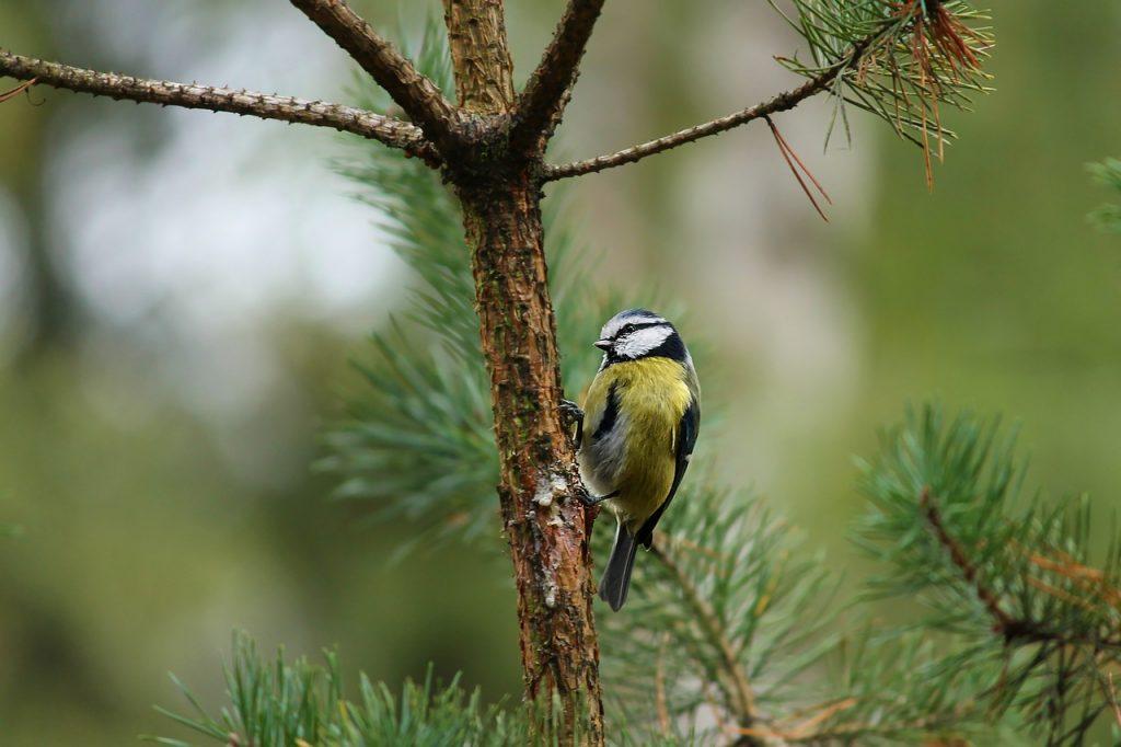 dream bird singing