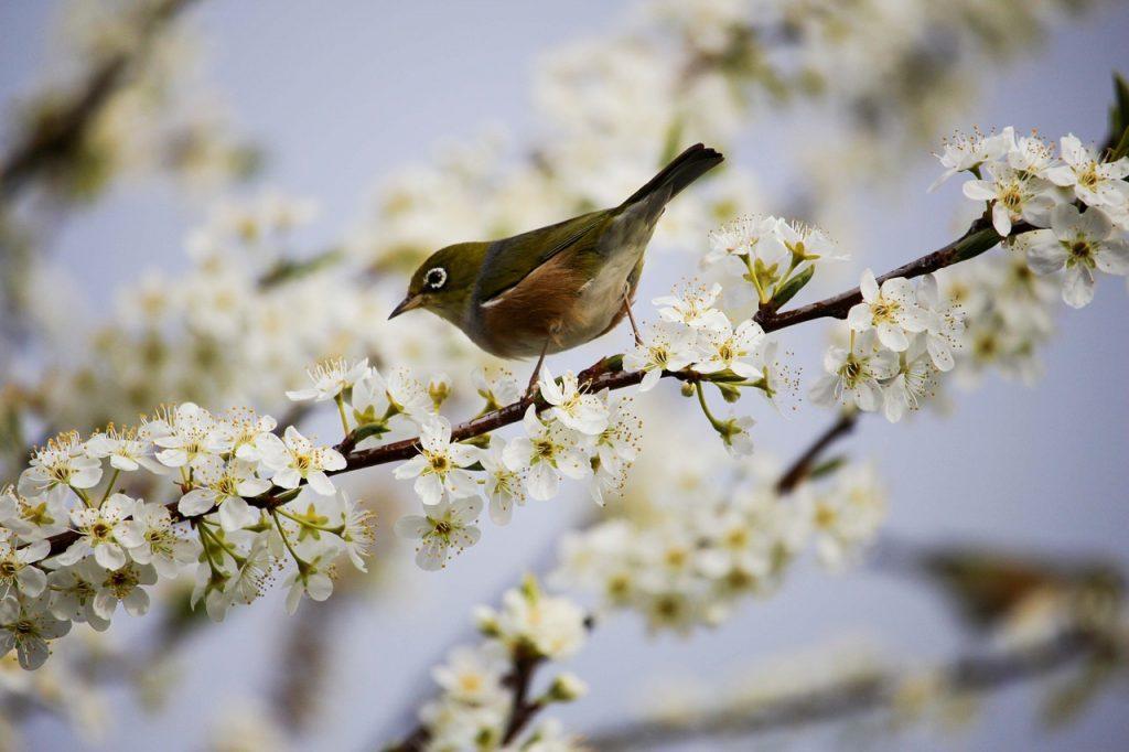 dream birds on trees