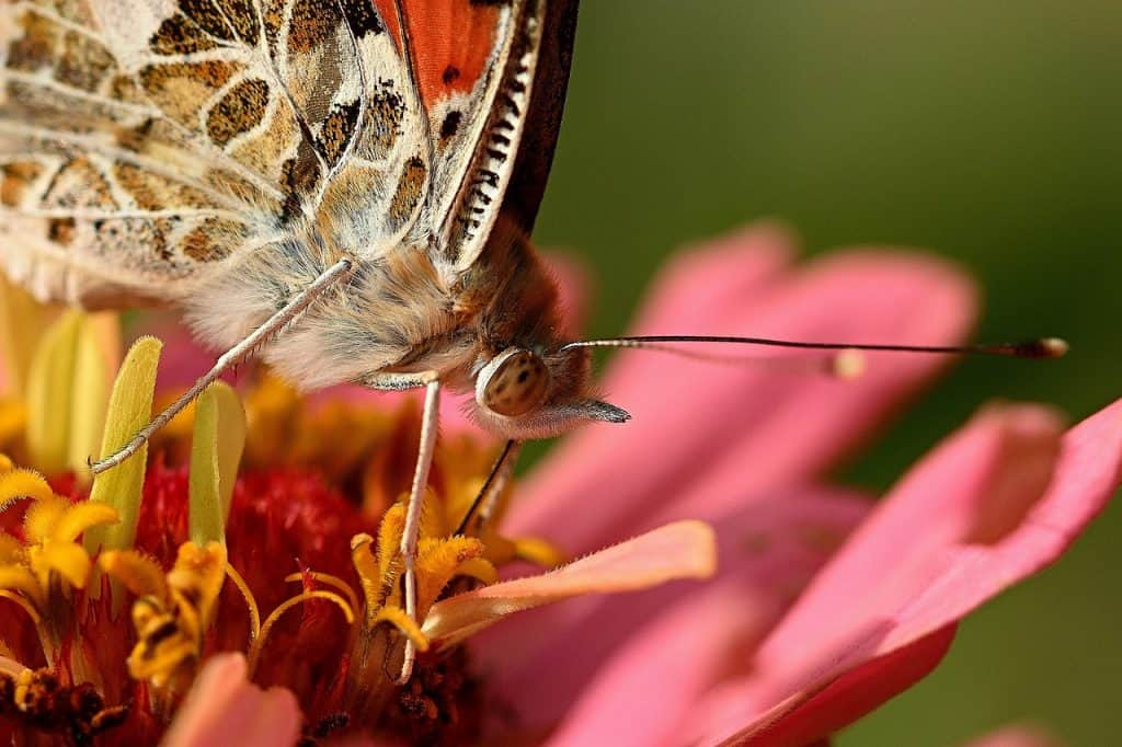 butterfly dream meaning