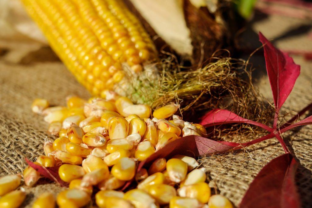 dream meating corn