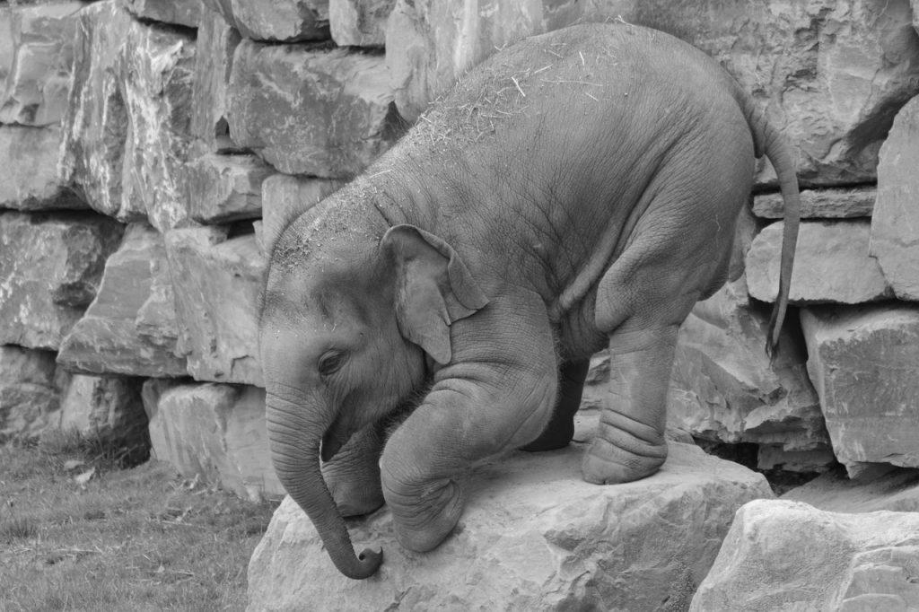 dream baby elephant