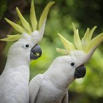 parrot dream meaning