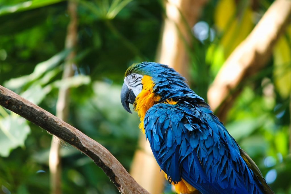 dead parrot dream meaning