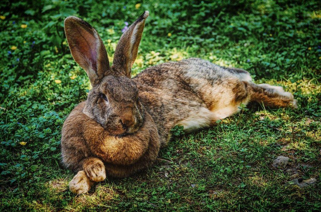 rabbit dream meaning