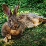 rabbit dream meaning
