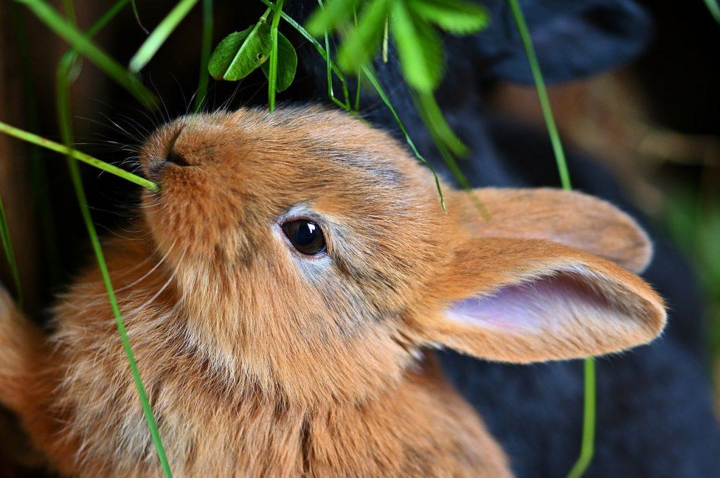 dream dead rabbit