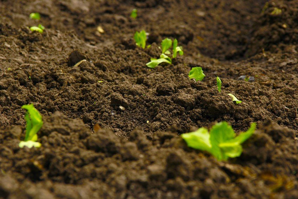 soil dream meaning