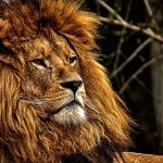 lion dream interpretation