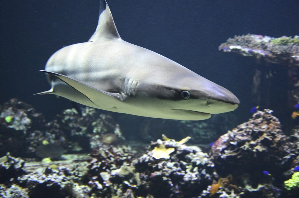 shark dream interpretation