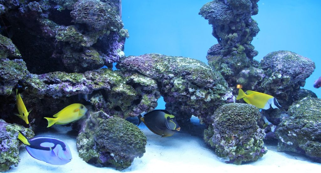 Aquarium Dream Interpretation