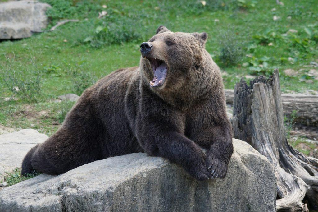 black bear dream meaning