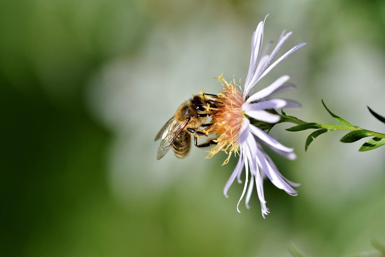 bee dream interpretation