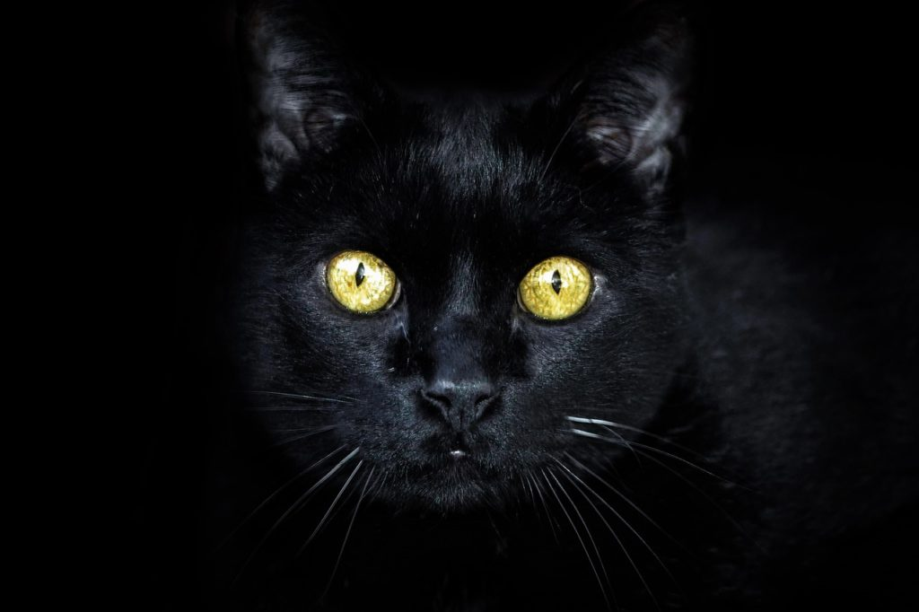 Black Cat Dream Interpretation