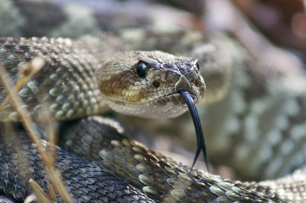 killing black snake in dream