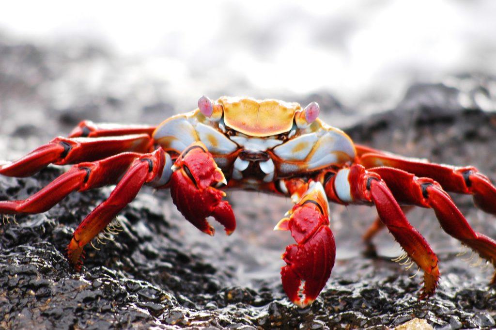 Crabs Dream Interpretation