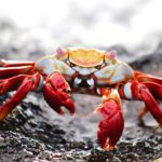 Crabs Dream Interpretation