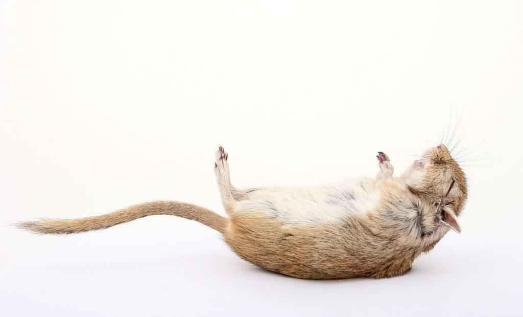 Dream Interpretation of Dead Rats