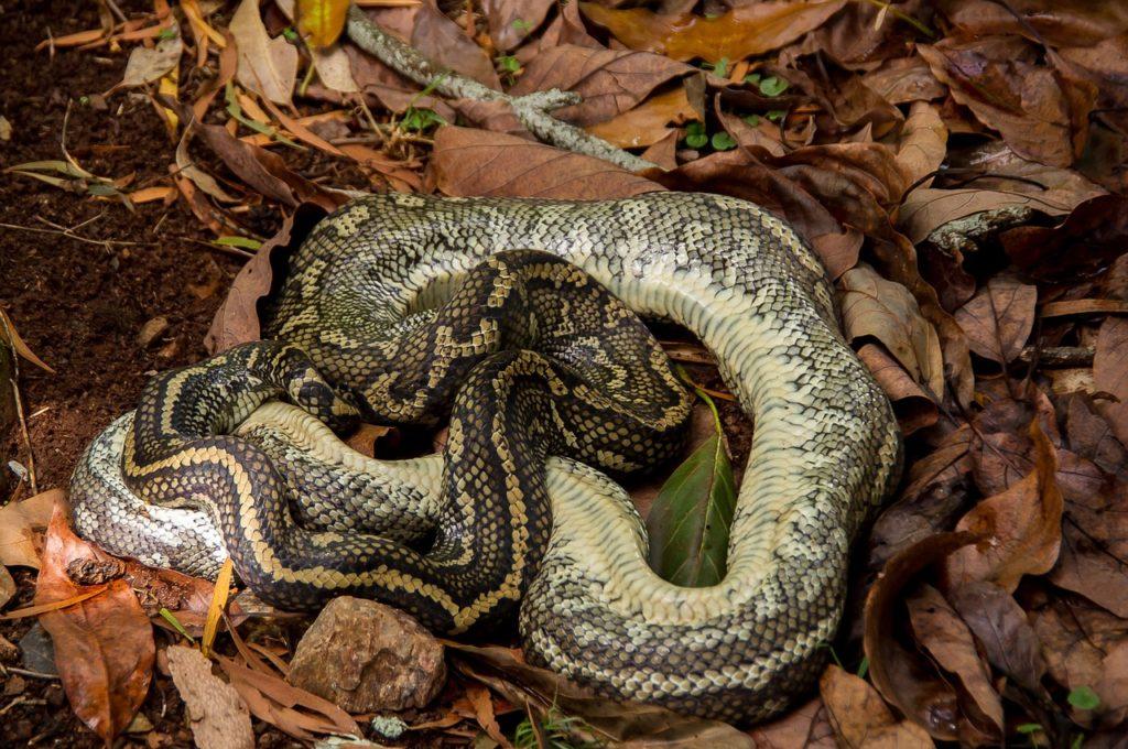 Dead Snakes Dream Interpretation