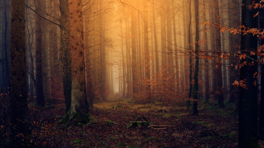 Forest Dream Interpretation