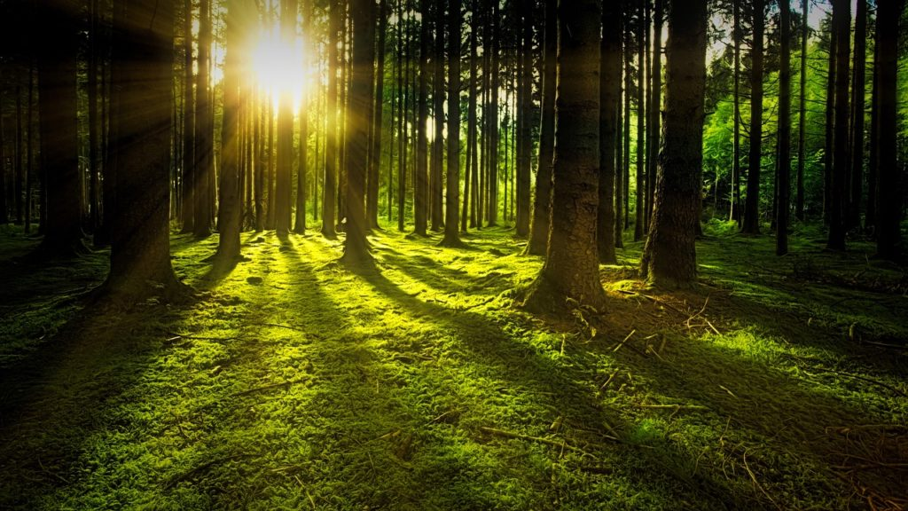 green forest dream meaning
