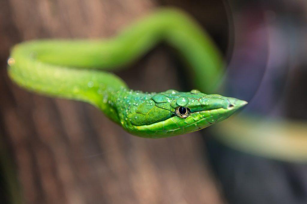 Green Snake Dream Interpretation