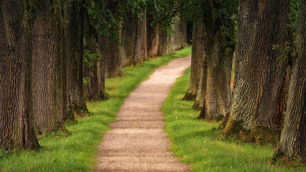 Path Dream Interpretation