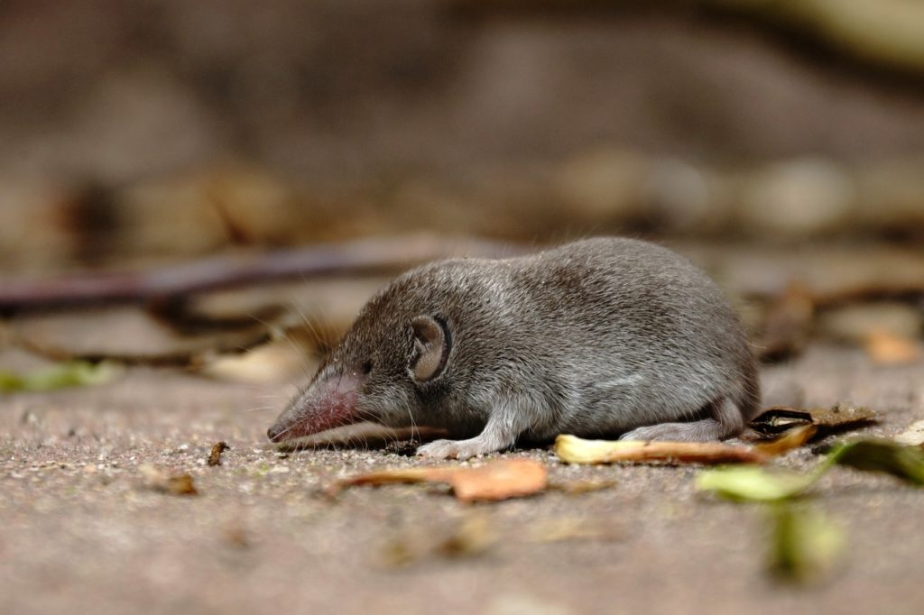 Shrew Dream Interpretation