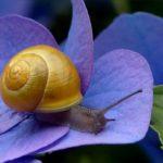 Snail Dream Interpretation