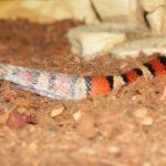 Striped Snake Dream Interpretation