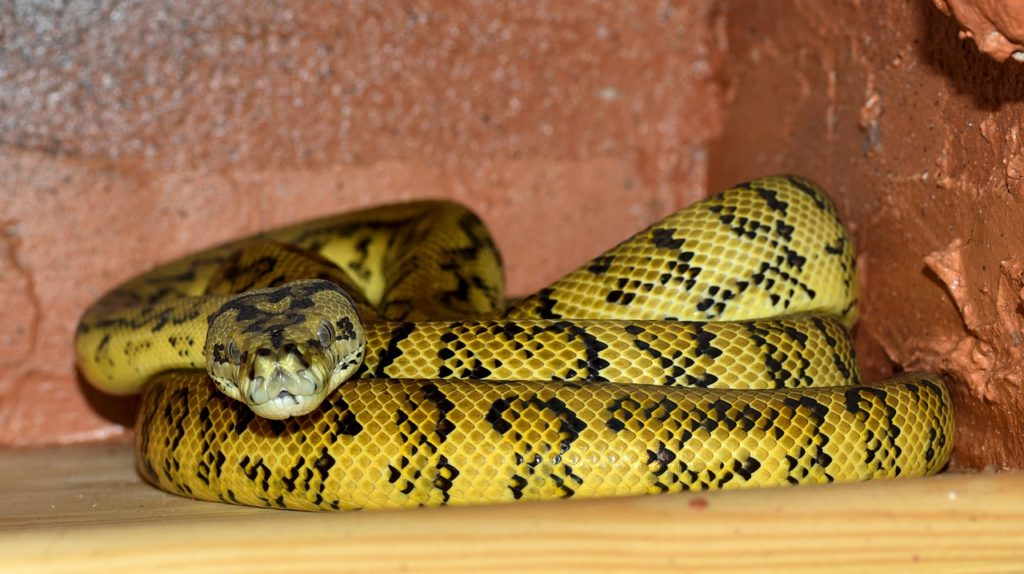 dream about yellow snake attacking me