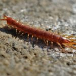 Centipede Dream Interpretation