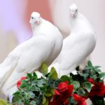 Dove Pigeon Dream Interpretation
