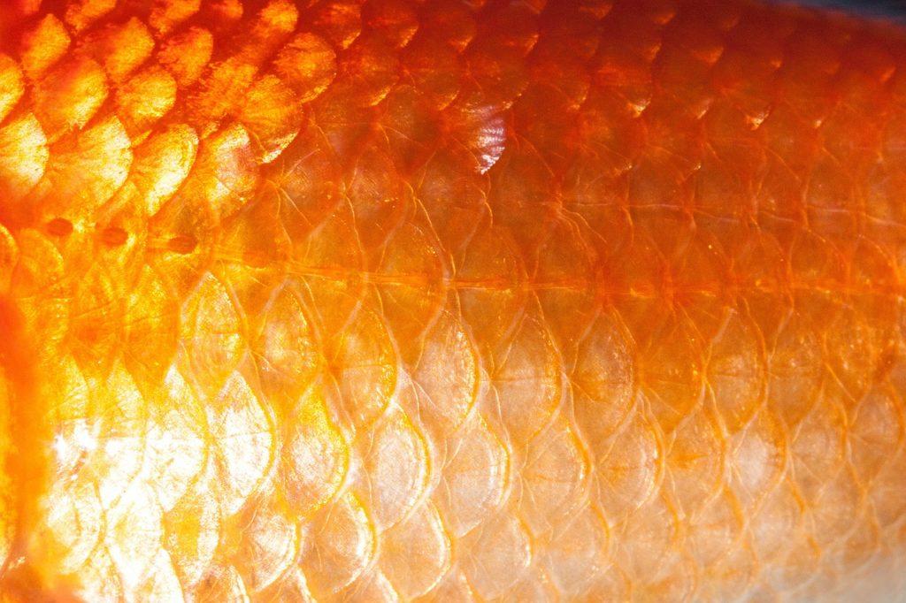Goldfish Dream Interpretation