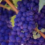 Grapes Dream Interpretation