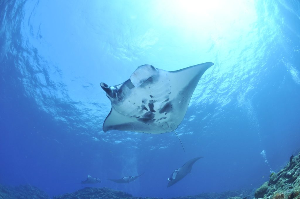 Stingray Dream Interpretation